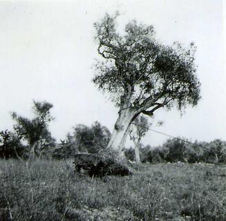 Le SERVAN  arachage olivier 2