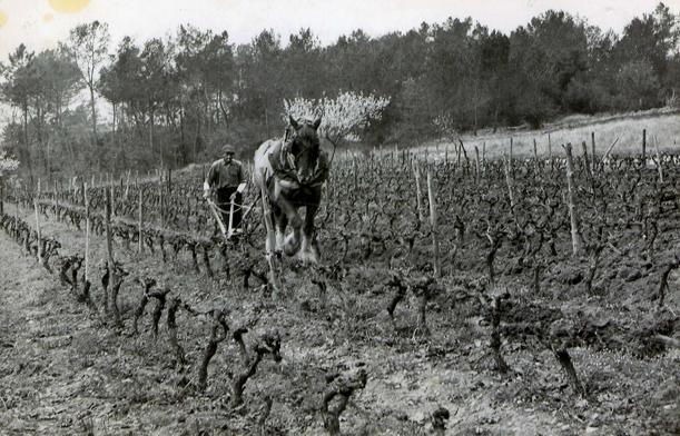 Le SERVAN labour vigne