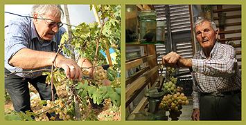 Récolte et conservation du servant