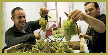 la vigne communale